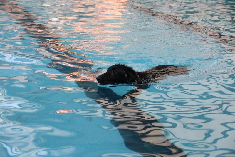 スカイも泳ぐ
