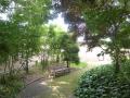 ビフォー 木陰は多くて涼しいです