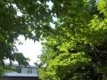 木陰も暑く、蝉も1匹、2匹、3…合唱になって来た!