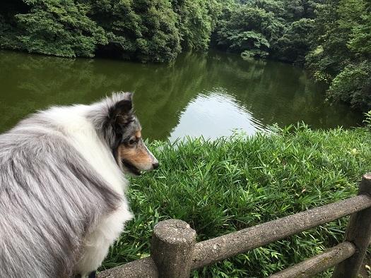 鎌倉湖95