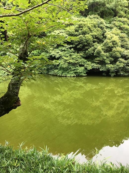 鎌倉湖94