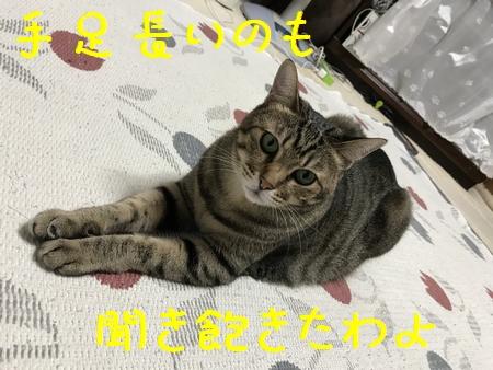 20170915 (5)