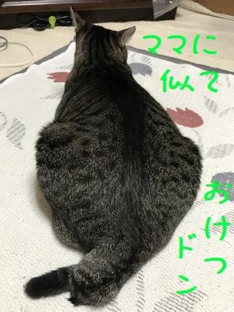 20170922 (1)