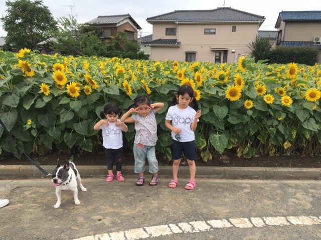 himawari20171.jpg