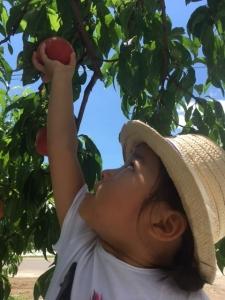 peach20173.jpg