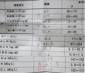 血液検査-検査結果