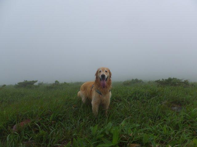 霧ヶ峰高原 2017.7.21 023