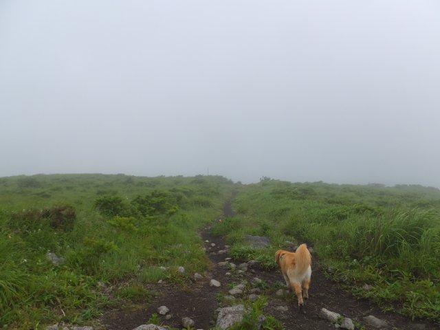 霧ヶ峰高原 2017.7.21 024
