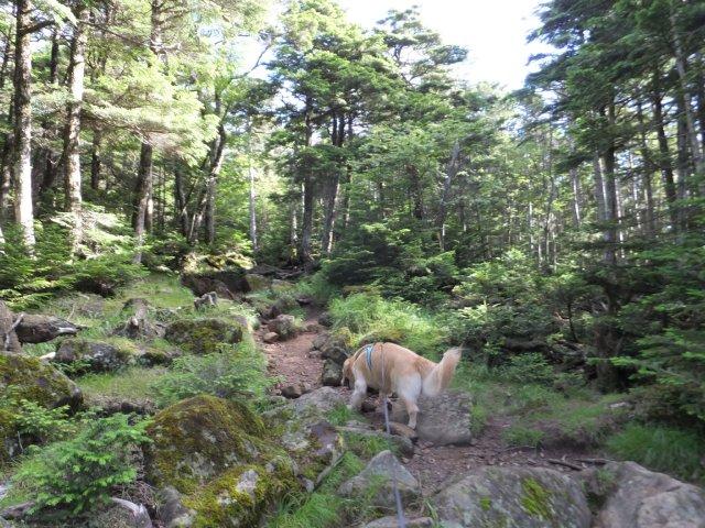 茶臼山と縞枯山 2017.8.4 017