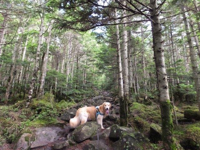茶臼山と縞枯山 2017.8.4 043