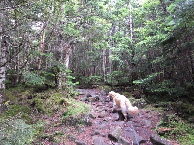 茶臼山と縞枯山 2017.8.4 045