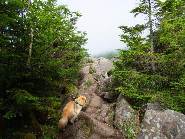 茶臼山と縞枯山 2017.8.4 049