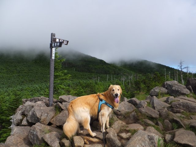 茶臼山と縞枯山 2017.8.4 051