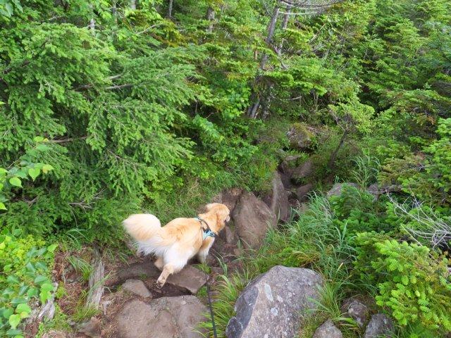 茶臼山と縞枯山 2017.8.4 058