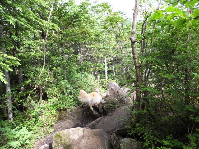 茶臼山と縞枯山 2017.8.4 059