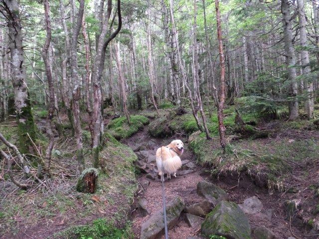 茶臼山と縞枯山 2017.8.4 064