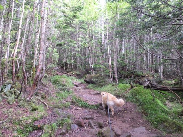 茶臼山と縞枯山 2017.8.4 066