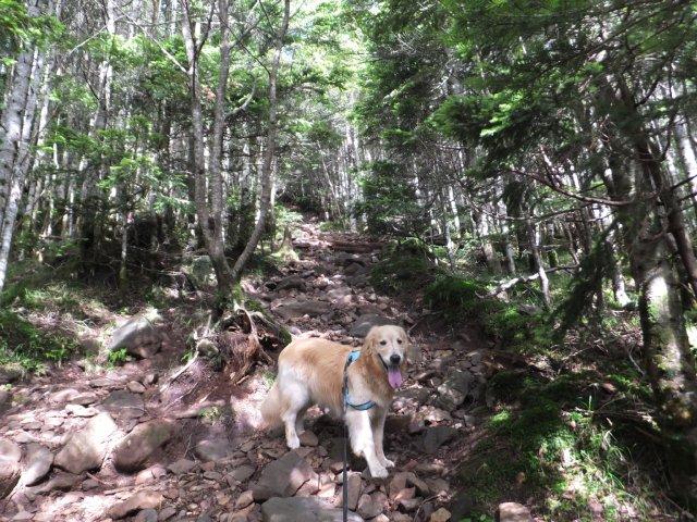 茶臼山と縞枯山 2017.8.4 079