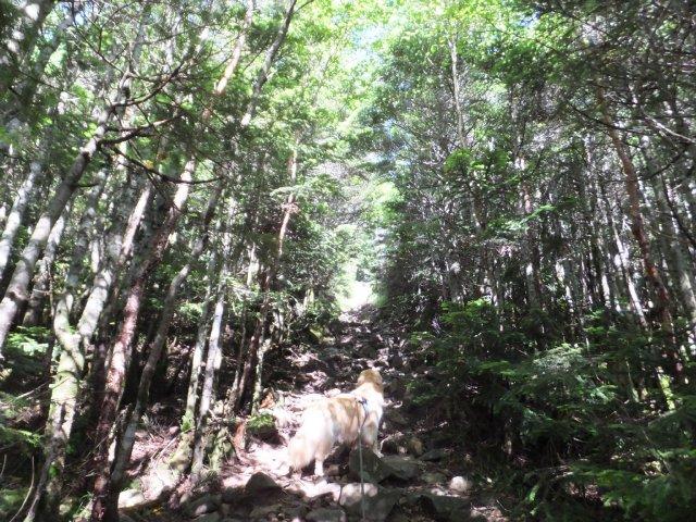 茶臼山と縞枯山 2017.8.4 103