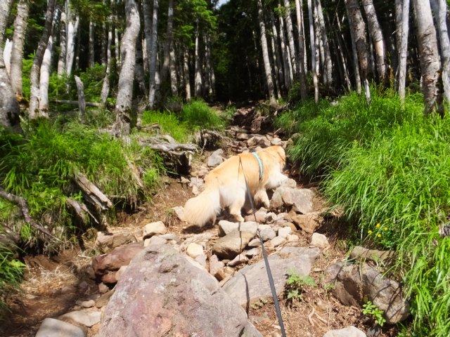 茶臼山と縞枯山 2017.8.4 113