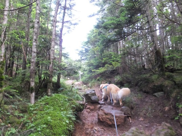 茶臼山と縞枯山 2017.8.4 123