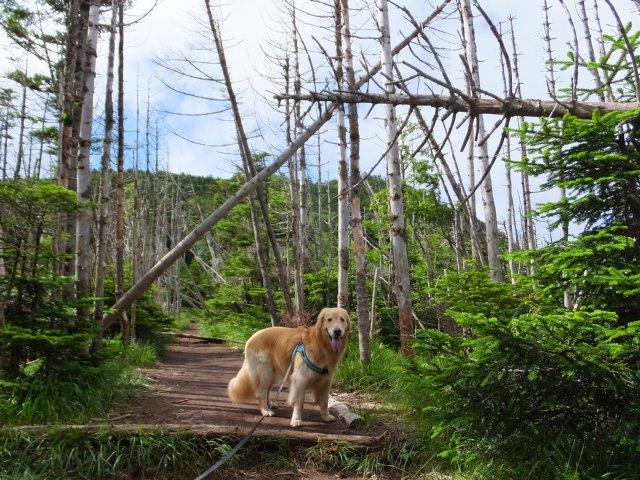 茶臼山と縞枯山 2017.8.4 142