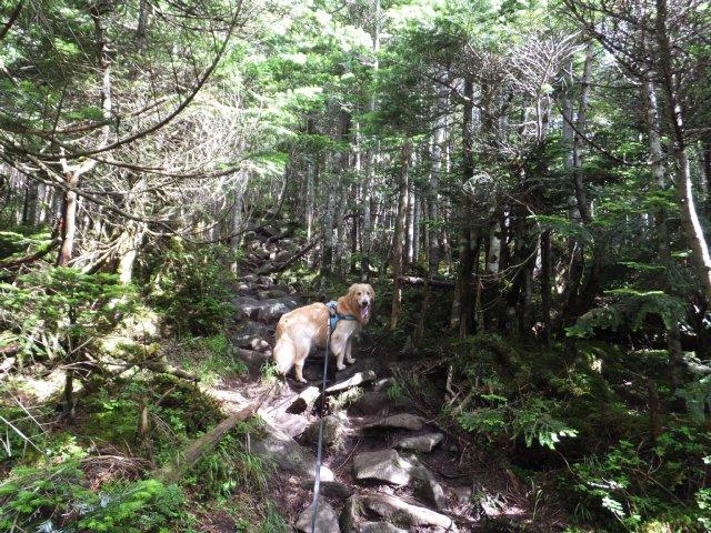 茶臼山と縞枯山 2017.8.4 146