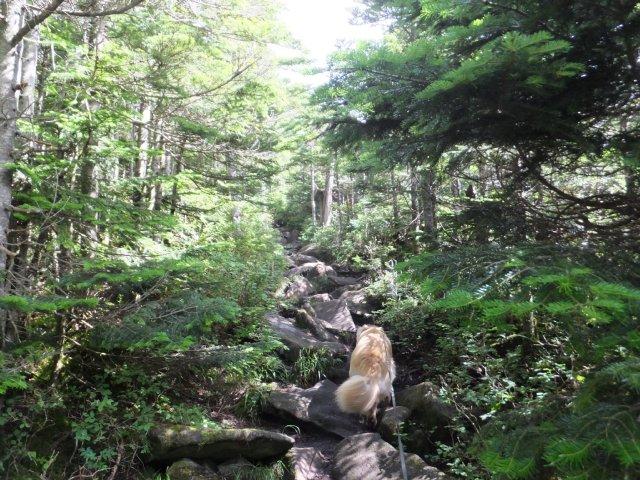 茶臼山と縞枯山 2017.8.4 165