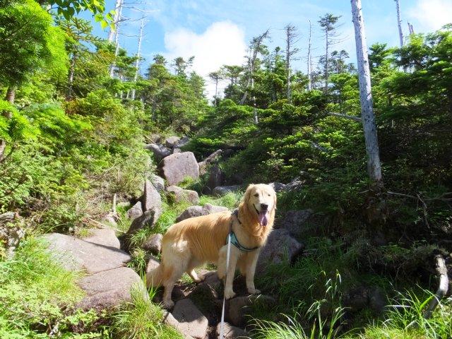 茶臼山と縞枯山 2017.8.4 170