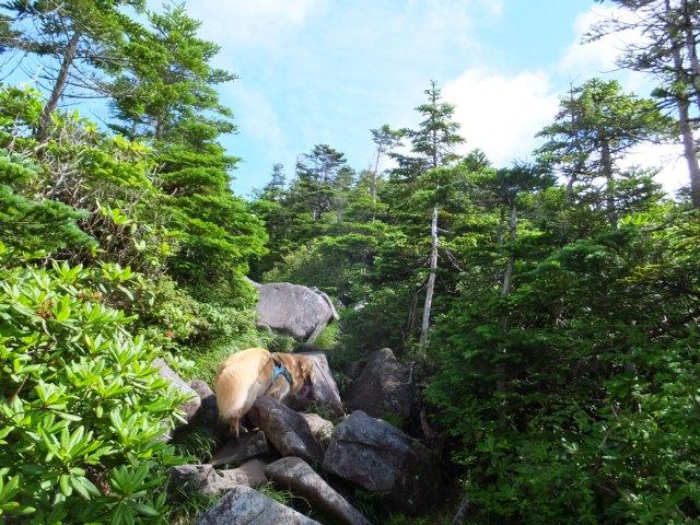 茶臼山と縞枯山 2017.8.4 172