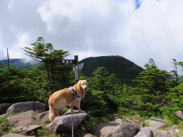 茶臼山と縞枯山 2017.8.4 175