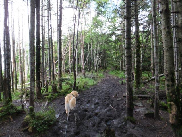 茶臼山と縞枯山 2017.8.4 178