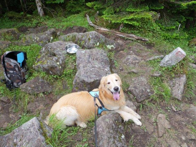 茶臼山と縞枯山 2017.8.4 187