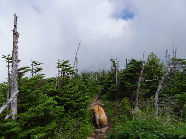 茶臼山と縞枯山 2017.8.4 195
