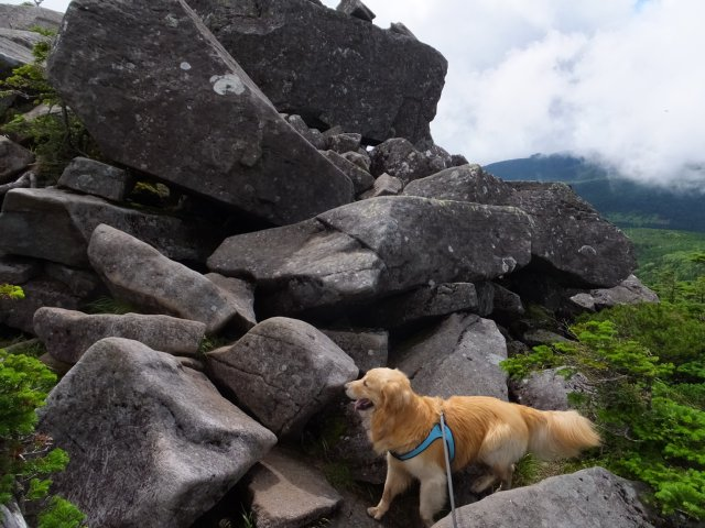 茶臼山と縞枯山 2017.8.4 207