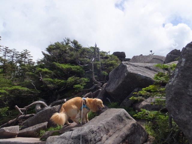 茶臼山と縞枯山 2017.8.4 212