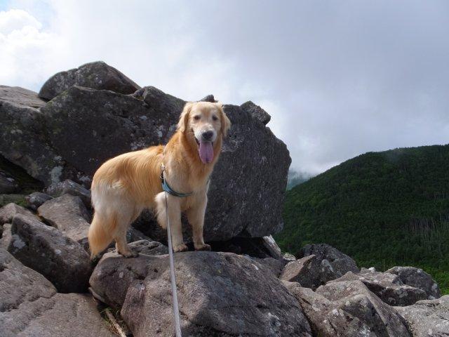 茶臼山と縞枯山 2017.8.4 214