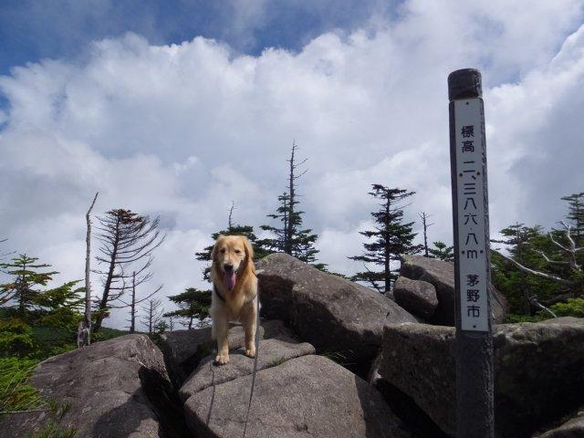 茶臼山と縞枯山 2017.8.4 218