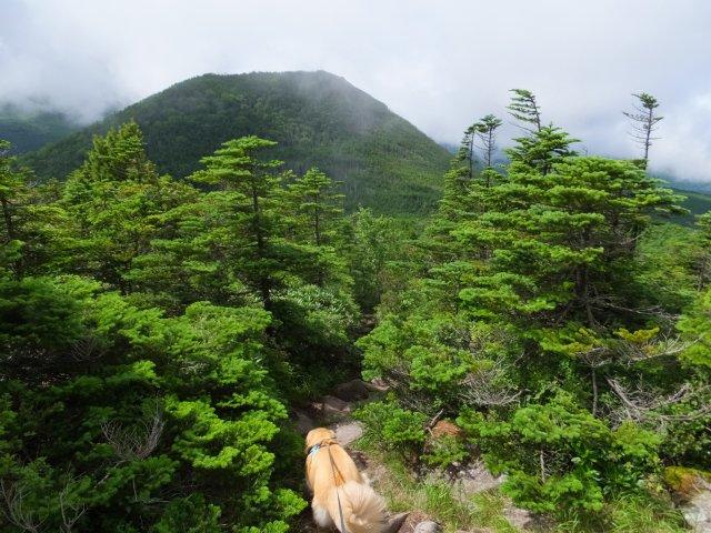 茶臼山と縞枯山 2017.8.4 219