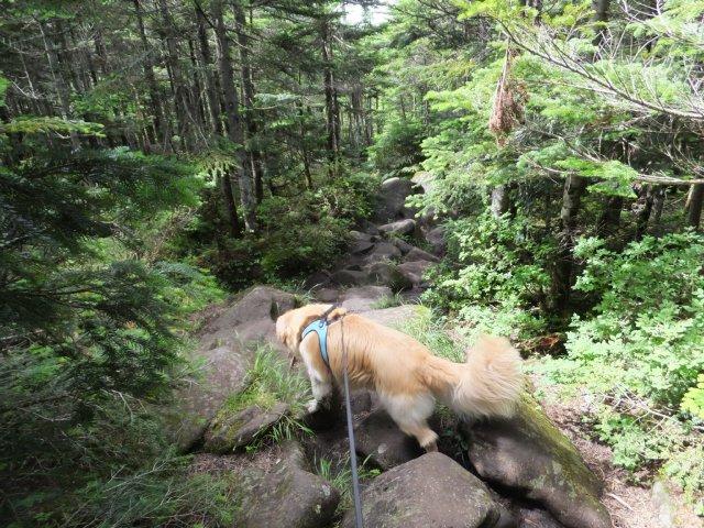 茶臼山と縞枯山 2017.8.4 221