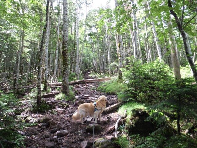 茶臼山と縞枯山 2017.8.4 234