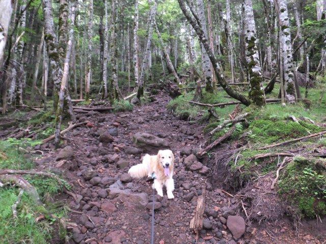茶臼山と縞枯山 2017.8.4 235