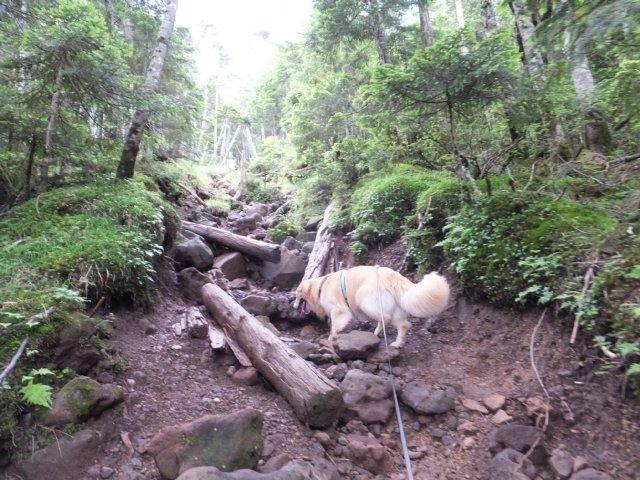 茶臼山と縞枯山 2017.8.4 240