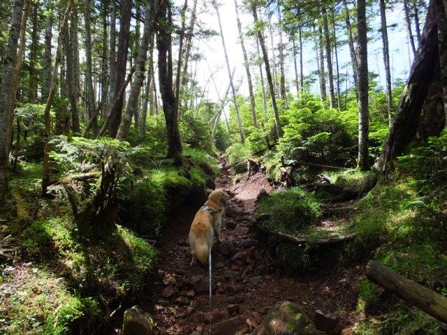 茶臼山と縞枯山 2017.8.4 245
