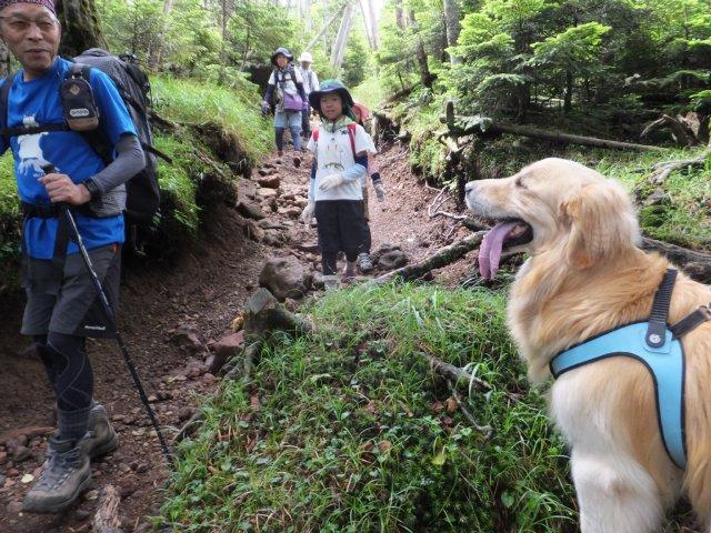 茶臼山と縞枯山 2017.8.4 246