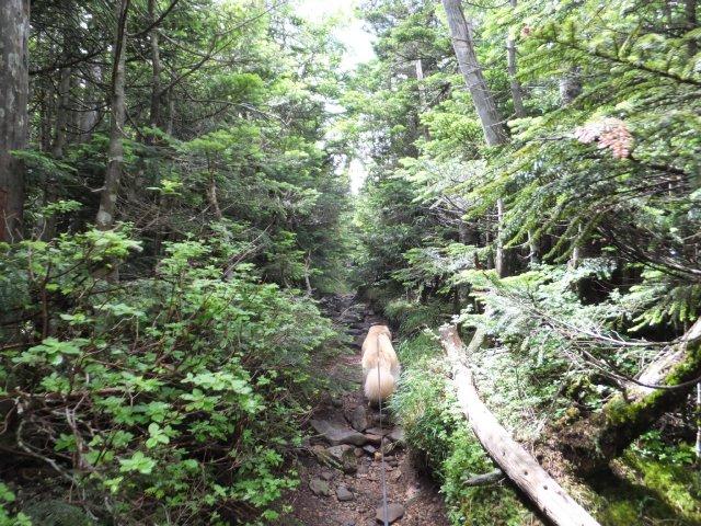 茶臼山と縞枯山 2017.8.4 247