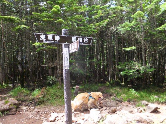 茶臼山と縞枯山 2017.8.4 248