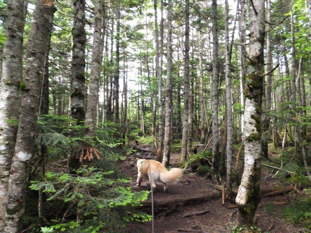 茶臼山と縞枯山 2017.8.4 251