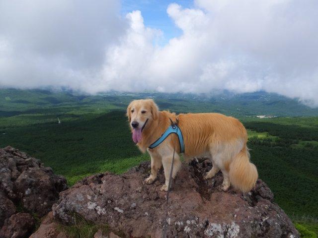 茶臼山と縞枯山 2017.8.4 256