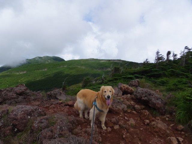 茶臼山と縞枯山 2017.8.4 261